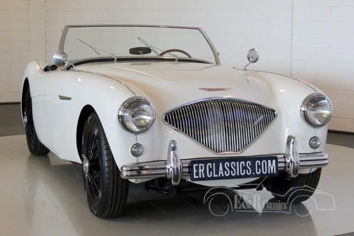 Austin-Healey 100-4 Overdrive 1955  kaufen