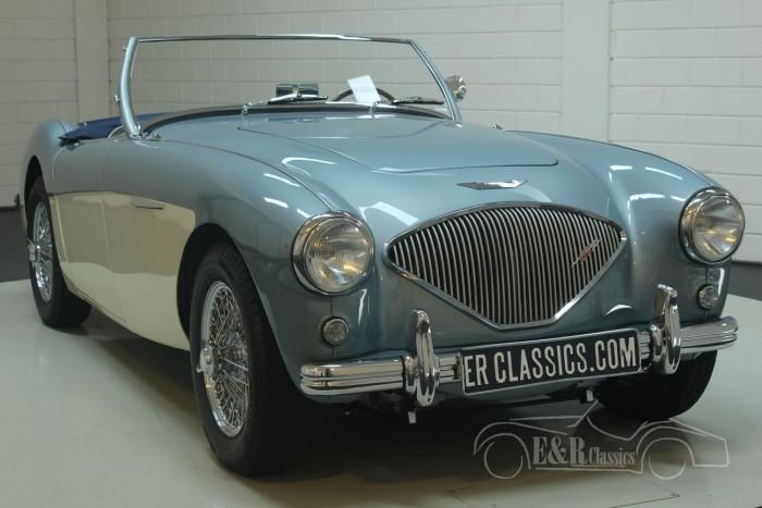 Austin-Healey 100-4 BN1 1954  kaufen