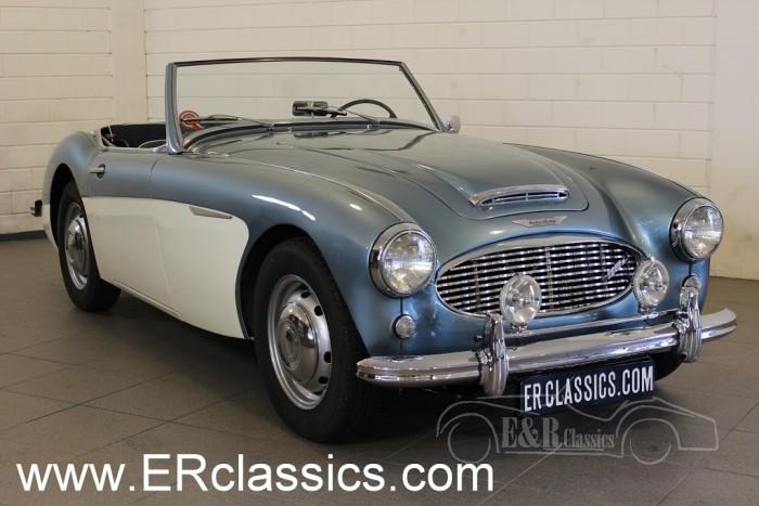 Austin Healey 3000 MKI 1959 kaufen