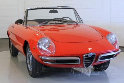 Alfa-Romeo Veloce Duetto Spider   kaufen