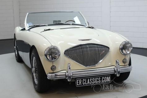 Austin Healey 100-4 BN2 1956  kaufen