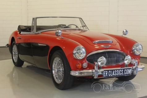 Austin Healey 3000 MK3 1967  kaufen
