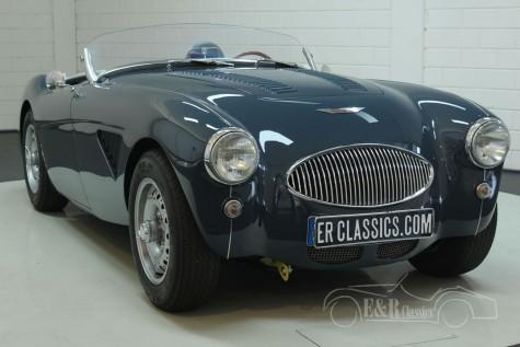 Austin Healey 100-4 BN1 1955  kaufen