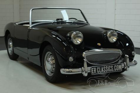 Austin Healey Sprite MK1 1959 kaufen