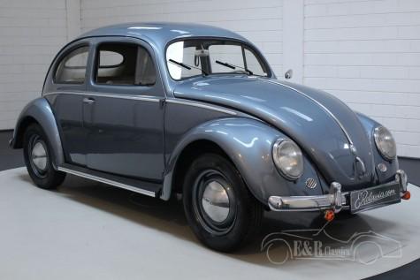 Volkswagen Beetle Oval 1955 kaufen