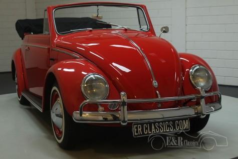 VW Kaefer Kabriolett 1959  kaufen