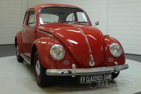 Volkswagen Kaefer 1966  kaufen