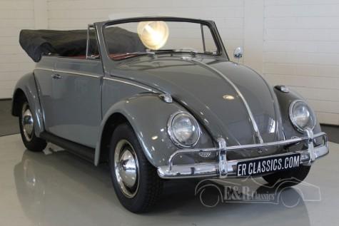 Volkswagen Beetle Cabriolet 1963 kaufen